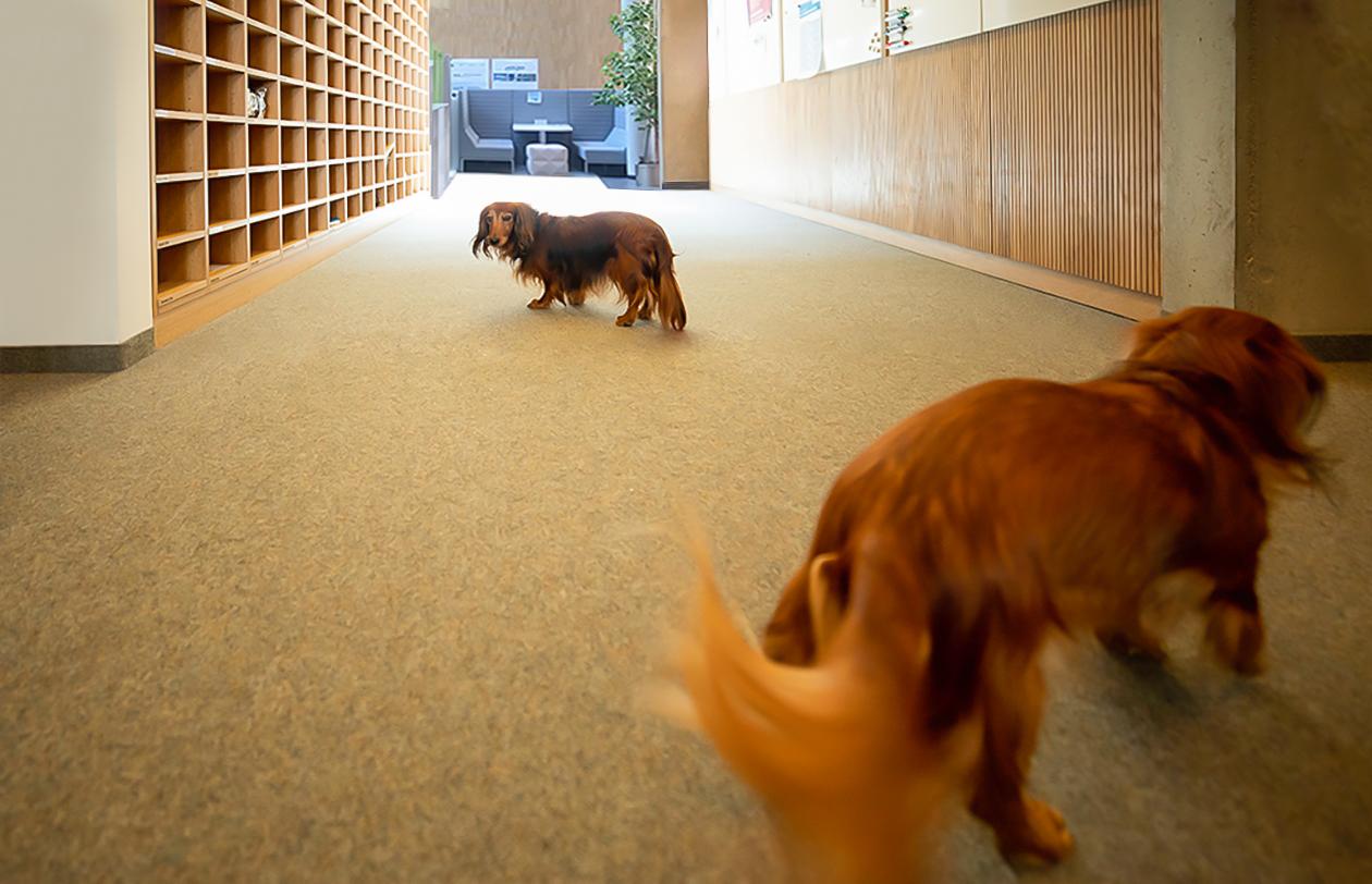 Hunde gehören bei der CP Bauteam zum Gute-Laune-Alltag